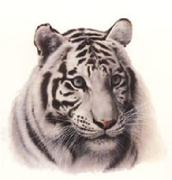 an analysis of white tigers In most cultures, children are raised with a set of morals and ideals to strive for however, what is rarely mentioned is the difficulty of embodying these ideals, especially when one's closest companions have the most impact on one's morality this struggle is prevalent in the development of the .
