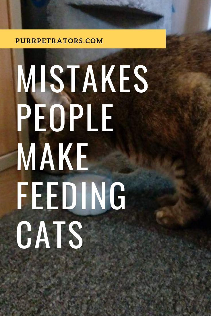 Mistakes People Make Feeding Cats Cat Feeding Feeding Kittens