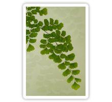 Sticker - #fern #maidenhairfern #sandrafoster