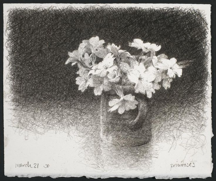 Primrose Study - Sarah Gillespie (2011) charcoal on paper
