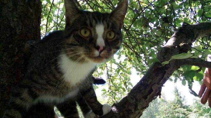 Tygrysek na drzewie