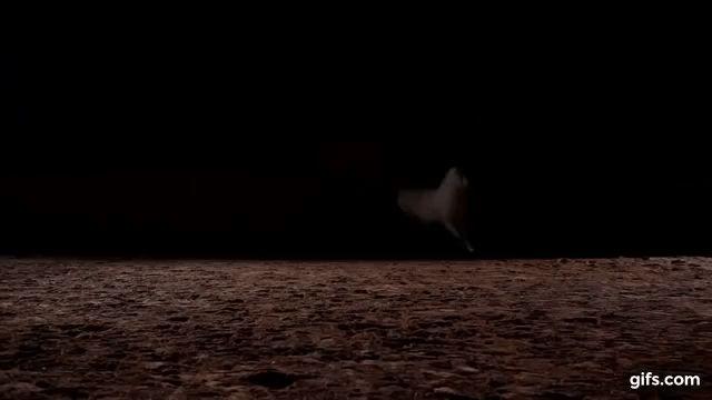 Impresionante caballos en la naturaleza HD