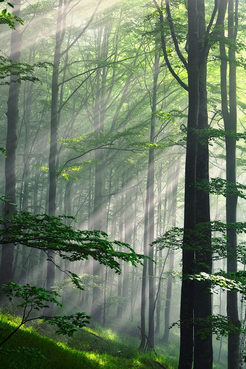 Forest with rays of light …