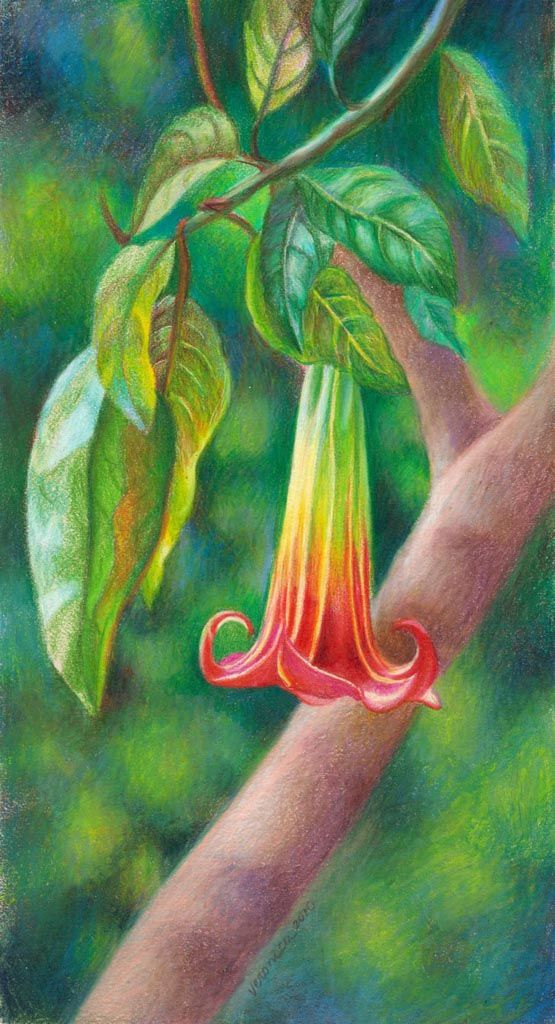 Veronica Winters - Tropical flower, the bell (Colored Pencil)