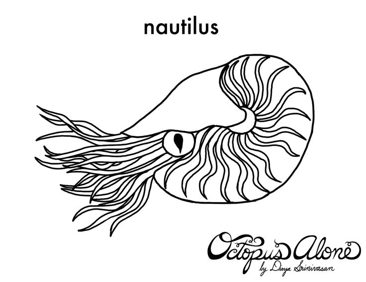 22 best nautilus images on Pinterest