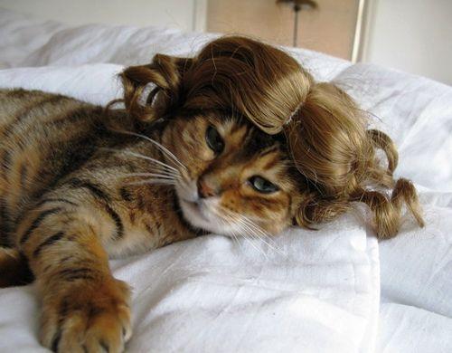 Khi mèo hóa trang thành các cô nàng xinh đẹp http://bepmoi.vn/dmsp/bep-tu-teka/ http://bepmoi.vn/dmsp/bep-tu-cata/ http://bepmoi.vn/dmsp/bep-dien-bep-hong-ngoai/