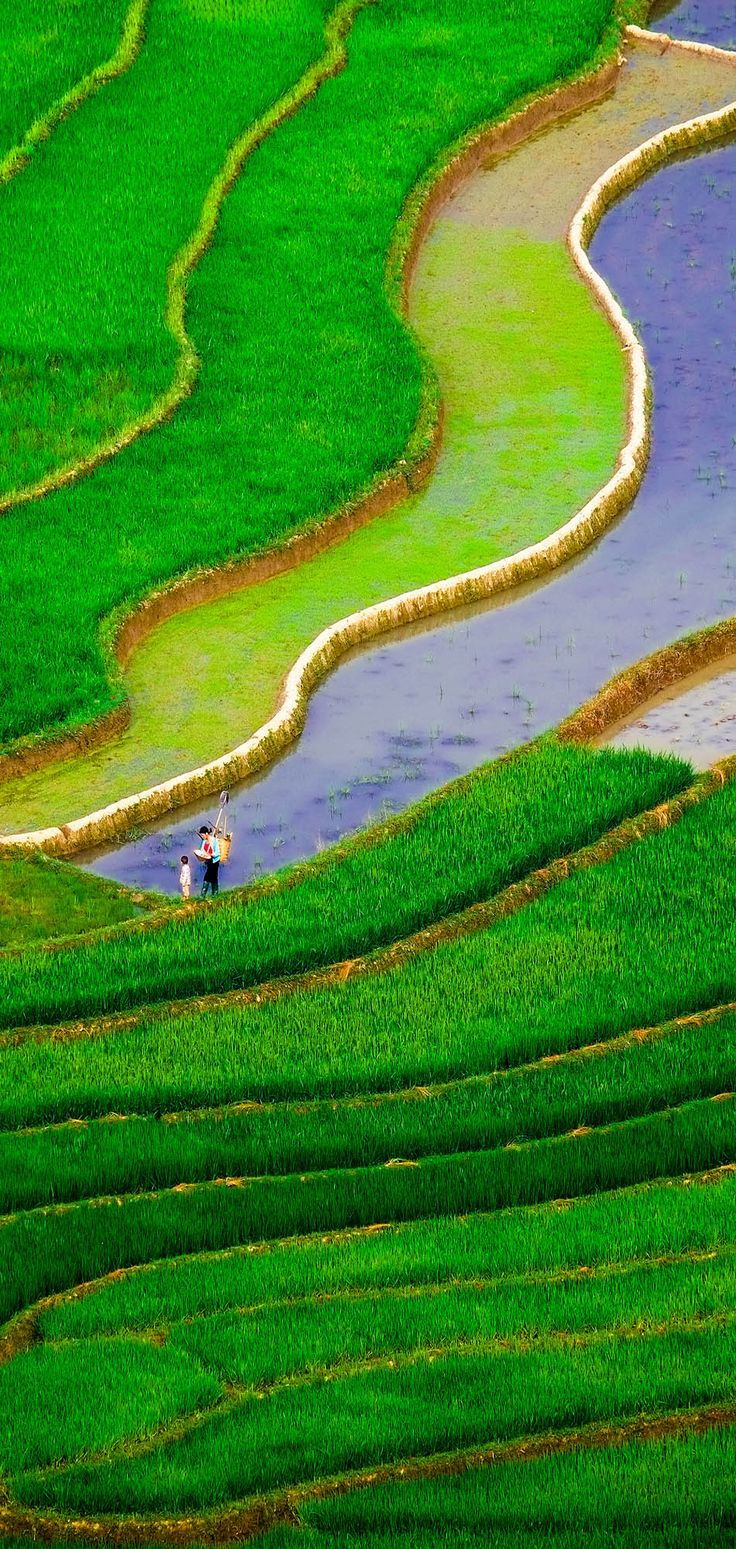 Rice fields on terraced of Mu Cang Chai, YenBai, Vietnam     |    17 Unbelivably Photos Of Rice Fields. Stunning No. #15