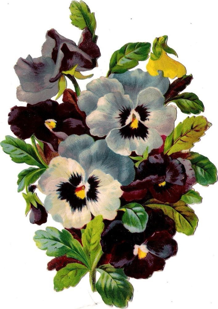 Oblaten Glanzbild scrap die cut chromo Blume 18cm fleur Stiefmütterchen pansy