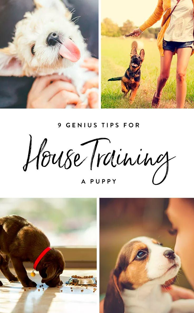 9 Genius Tips for House-Training a Puppy via @PureWow