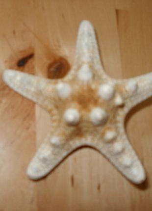 Barrette crocodile étoile de mer   Barrette à cheveux  Forme: étoile de mer  Attache: pince crocodile  Acheté dans une boutique au bord de mer  J'en ai deux à vendre pour les intéressées.