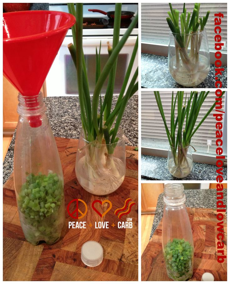 Did you know you can grow green onions in a cup of water in your window sill? Then you can trim them, put them in a plastic bottle and store them in your freezer for perfect freeze dried green onions. Then you always have them on hand when you need them.  To grow them, save about an inch and a half of the white part of the onion (including bulb and roots) and place them in about a half an inch of water. Change water every 2-3 days. I grow them about 3-4 times before starting with fresh…