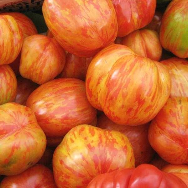 Tomat \'Tigerella' <br><i>Lycopersicon esculentum</i>