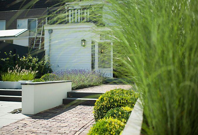 www.buytengewoon.nl. tuinontwerp - tuinaanleg - tuinonderhoud.  Moderne achtertuin met een klassiek knipoogje in Genemuiden. Niveauverschillen en gestuukte elementen maken deze tuin tot een heerlijke buitenruimte. De beplanting is óf wintergroen óf heeft een mooi winterbeeld.  www.buytengewoon.nl