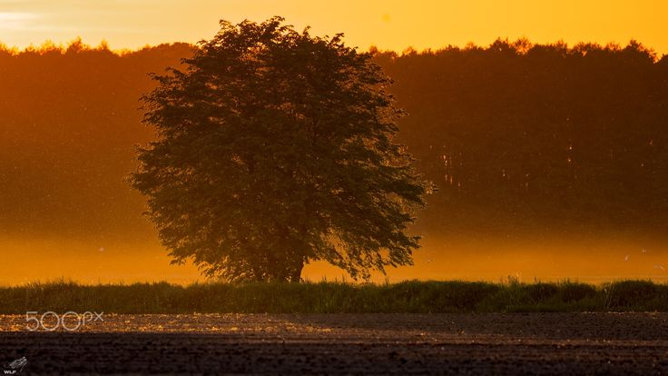 Tree on sunset - Gassy - Tree on sunset light with some fog and haze. Make this scenery even more tempting.