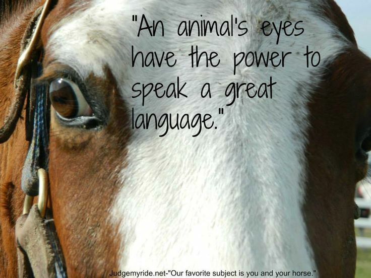An animals eyes have the power to speak a great language.