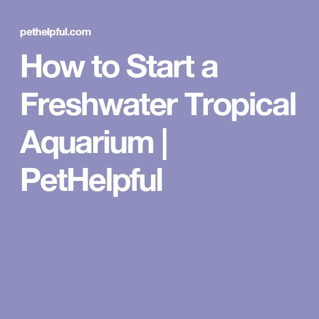 How to Start a Freshwater Tropical Aquarium | PetHelpful