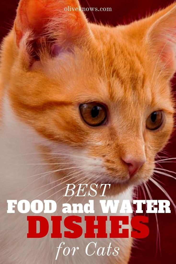 Best Food And Water Dishes For Cats Cats Cat Safety Best Cat Food