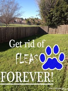 GET RID OF FLEAS NATURALLY IN YOUR YARD...from a professional home organizer. pretty sweet job!