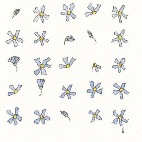 Forget-me-nots original illustration in ink pen and watercolours by EmilieOillustration