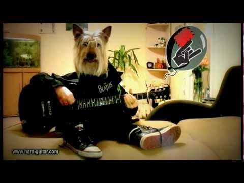 Happy Birthday Rock Song - Dog playing guitar - Funny Greeting Card - Hu...
