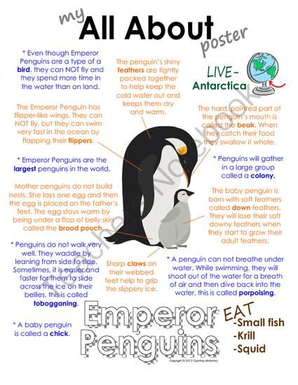 My All About Emperor Penguins Book - (Antarctic/Polar Animals) from Courtney McKerley on TeachersNotebook.com (9 pages)  - Also available in a polar animal bundle pack with walrus, polar bear, caribou and Arctic wolf. (Workbook, worksheet, printable, unit study, lesson)
