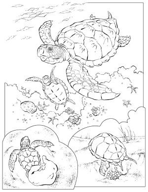 loggerhead sea turtle coloring page | ausmalbilder