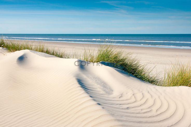 Vom Wind geformte Düne mit Sandwellen und Strandhafer / Langeoog Impression / Nordsee / Insel / Nordseeinsel / Strand / Nordseestrand / Dünen