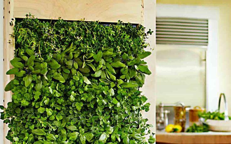 Os jardins verticais estão cada dia se tornando mais e mais utilizados em apartamentos. Você pode estar coçando a cabeça, se você mora em um apartamento