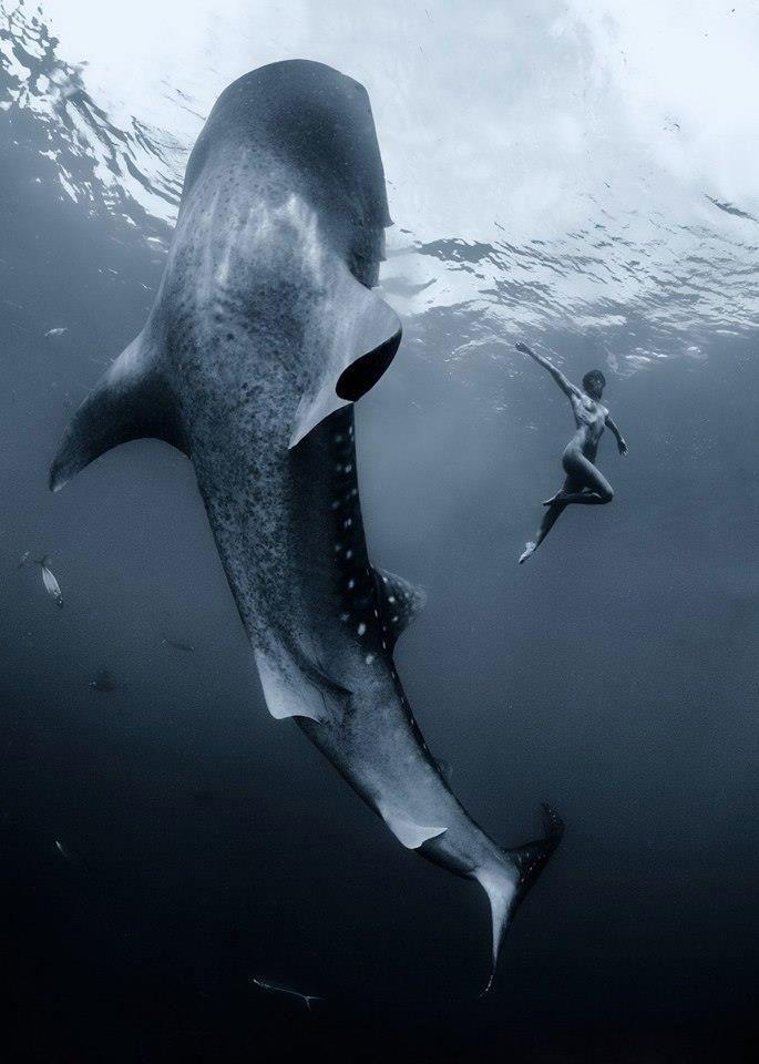 dance ocean shark - photo #7