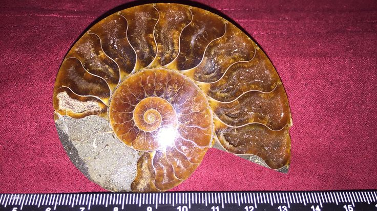 Beautiful Ammonite with crystals in the chambers. Approx. 150 million years old. Available soon at: www.relicsandrocks.com.au