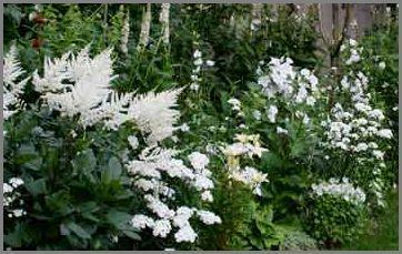 make a moon garden.  white flower inspirations.