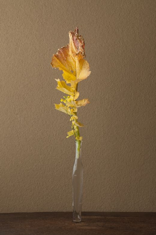 2012年5月9日(水)    この葉の色もかたちも名残りの姿です。   花=西洋芥子菜(セイヨウカラシナ)   器=古ガラス細瓶(20世紀)