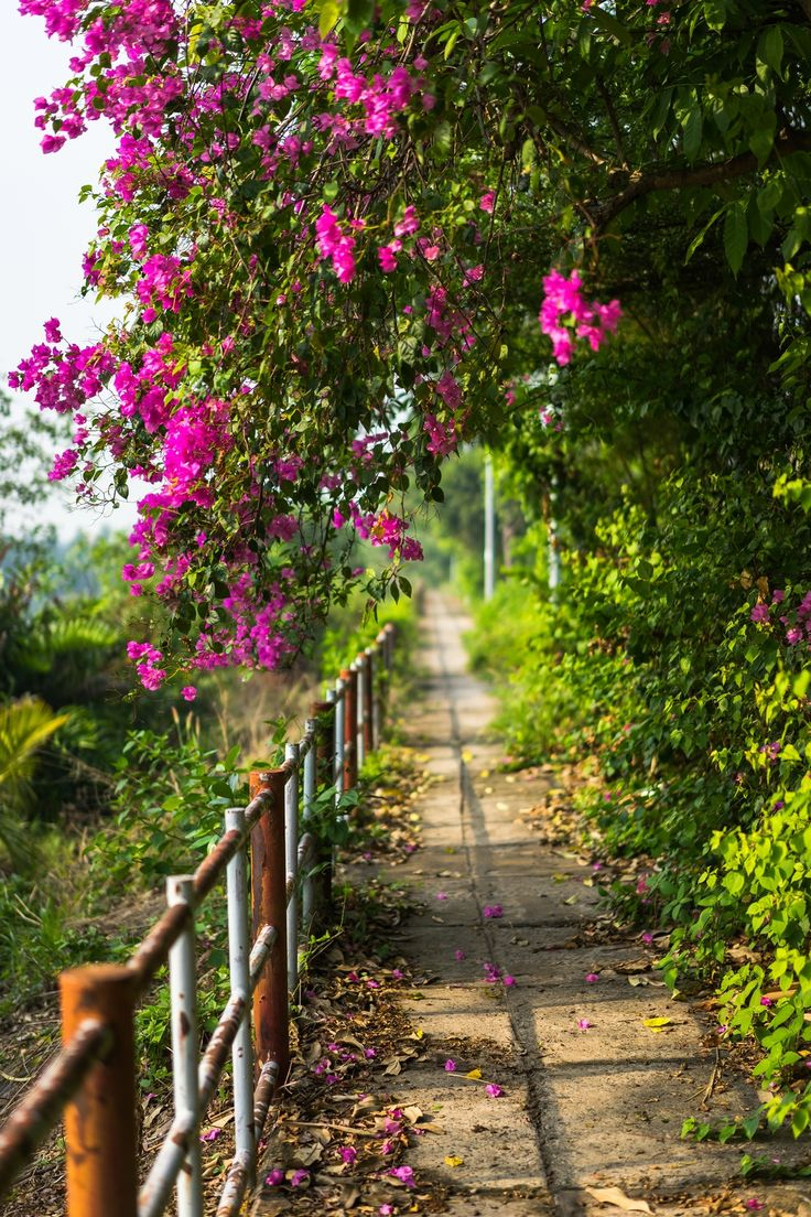 28 best Bougain® images on Pinterest | Bougainvillea, Plant care and ...