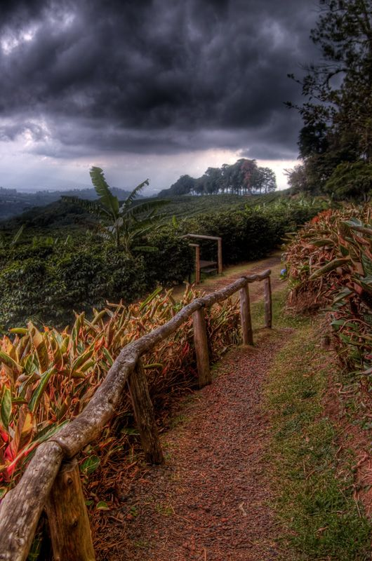 Coffee Plantation Alajuela, Costa Rica  Spent the best four years of my life there. Hmmmmmm. Memories