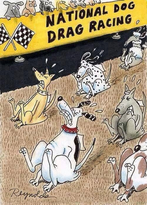 d9aab927ab36138a7f94b1ab63eea4d8 drag racing humorous animals