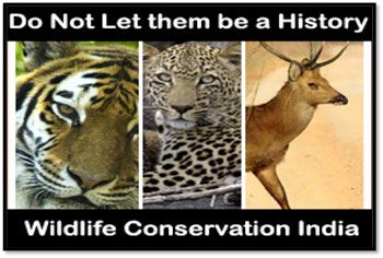 FIVE STEPS TO CONSERVE WILDLIFE OF INDIA