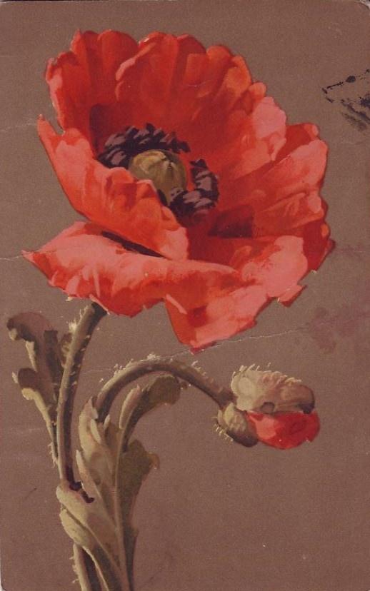 Best 25 Poppies Painting Ideas On Pinterest Poppy