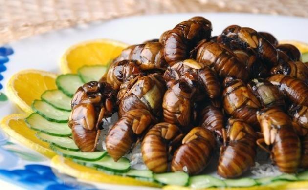 Hangi böcekler nerede yenir?1-Ağustos böceği   İlk sırada ağustos böceği yer alıyor. Kuşkonmaz ve patatesimsi bir tada sahip olan ağustos böceği Asya ve Amerika'nın belli yerlerinde tüketiliyor. Haşlayarak veya karides gibi kızartarak pişirilebilir.
