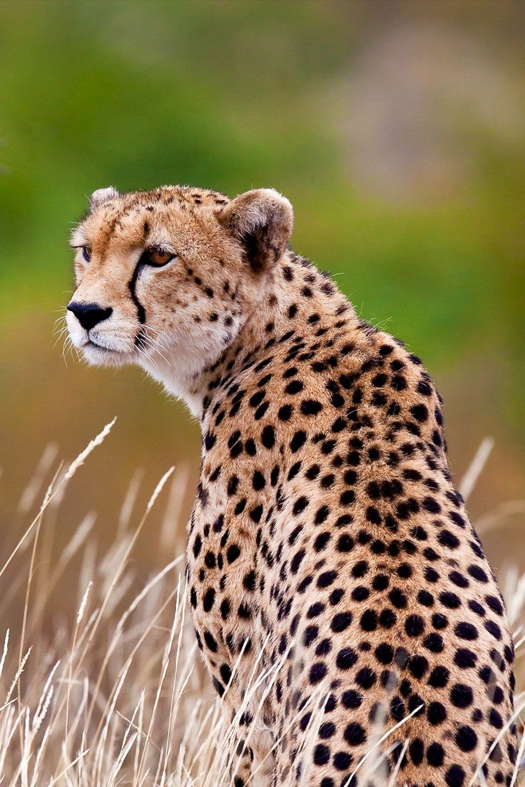 If you like getting up close and personal with nature, a Tanzania safari holiday is the perfect way to explore