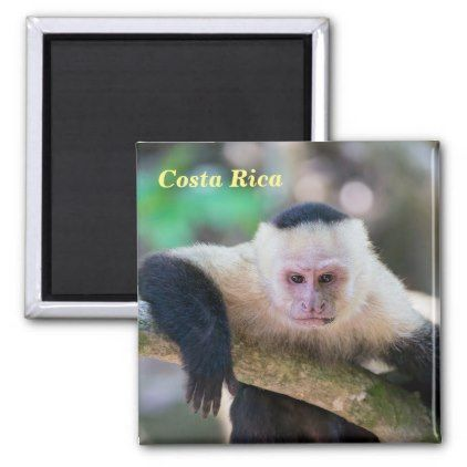 Costa Rica  - White headed capuchin monkey Magnet - home gifts ideas decor special unique custom individual customized individualized