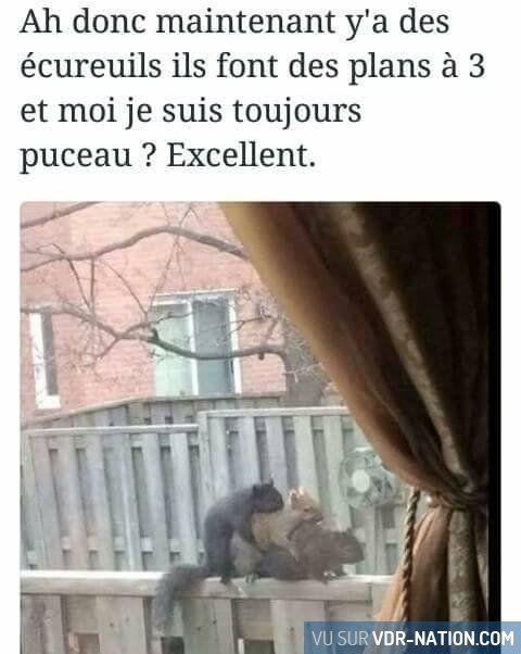 Les écureuils sont trop puissants ! XD