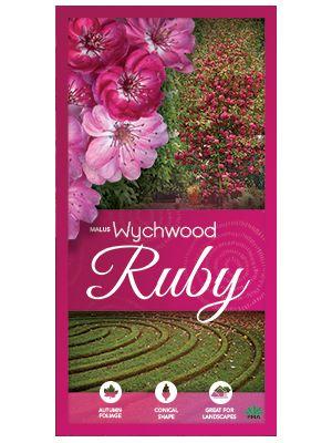 Plants Management Australia - Malus 'Wychwood Ruby'