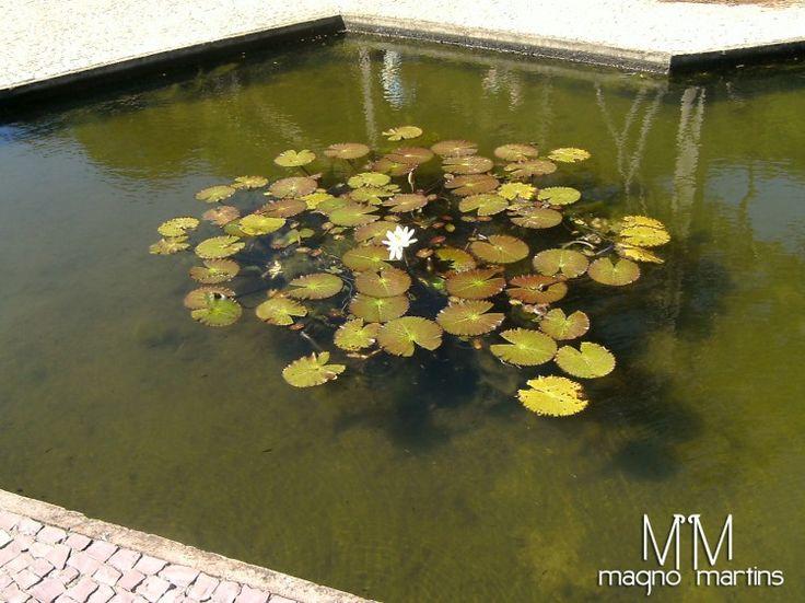 Parque das Mangabeiras - Belo Horizonte   Fotografia de Magno   Olhares.com