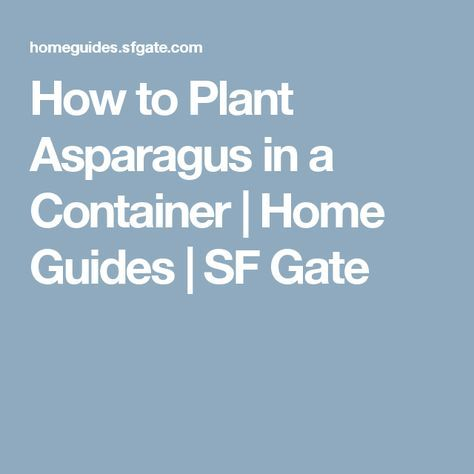 How to Plant Asparagus in a Container | Home Guides | SF Gate