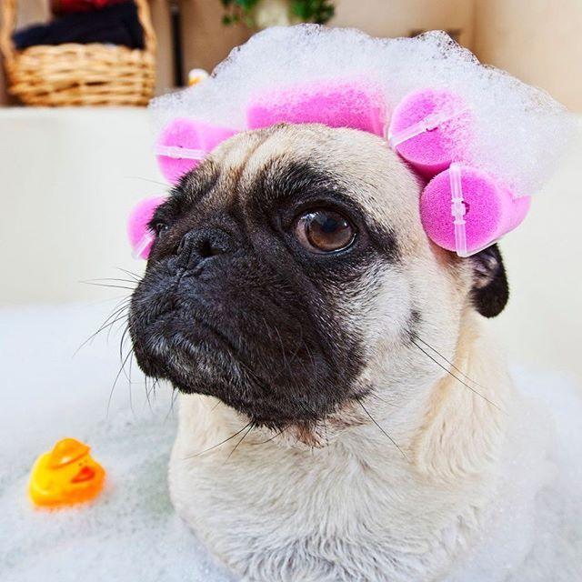 Pin By Humane Society Of Broward County On Instagram Posts Elegant Wedding Hair Unique Wedding Hairstyles Wedding Hairstyles