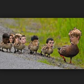 Follow Mama Newt, Glader ducklings! Oh my gosh!!!! Haha