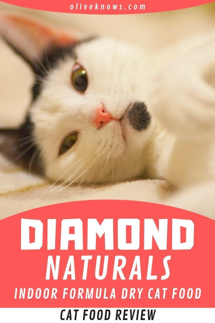 If You Are In A Tight Budget But Want To Get A Quality Dry Cat Food Especially For Indoor Cats Check The Review It Cou In 2020 Cat Food Reviews Dry