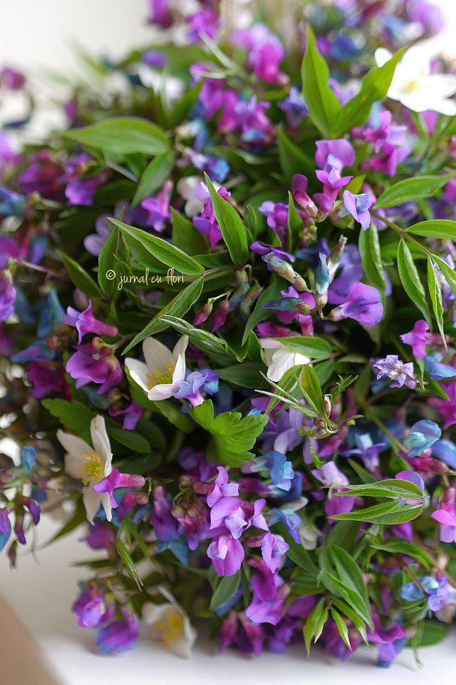 #transylvania #wildflowers #lila