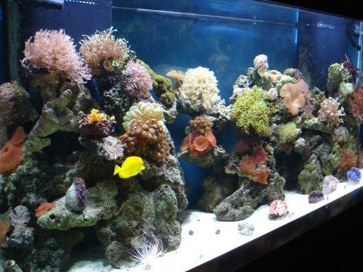 Best 25 marine aquarium fish ideas on pinterest for Live saltwater fish