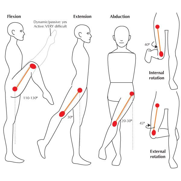 flexion - extention - abduction  external